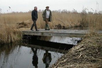 Inspecting Reed beds